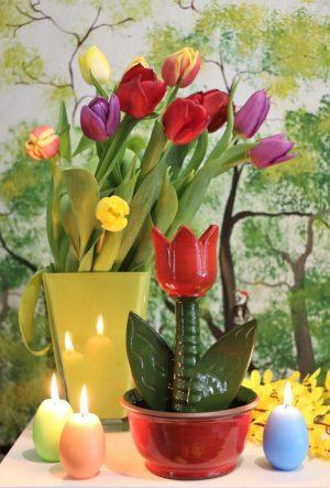 Tulipán v misce, v 21 cm